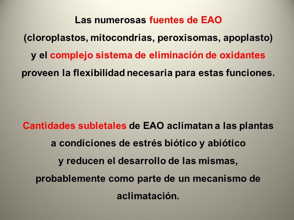 Las numerosas fuentes de EAO
