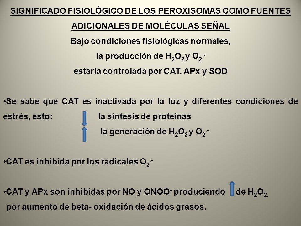 Bajo condiciones fisiológicas normales, la producción de H2O2 y O2.-