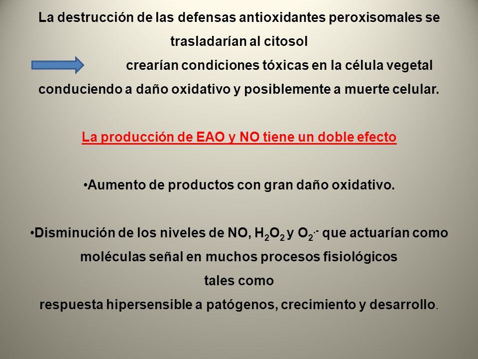 La producción de EAO y NO tiene un doble efecto