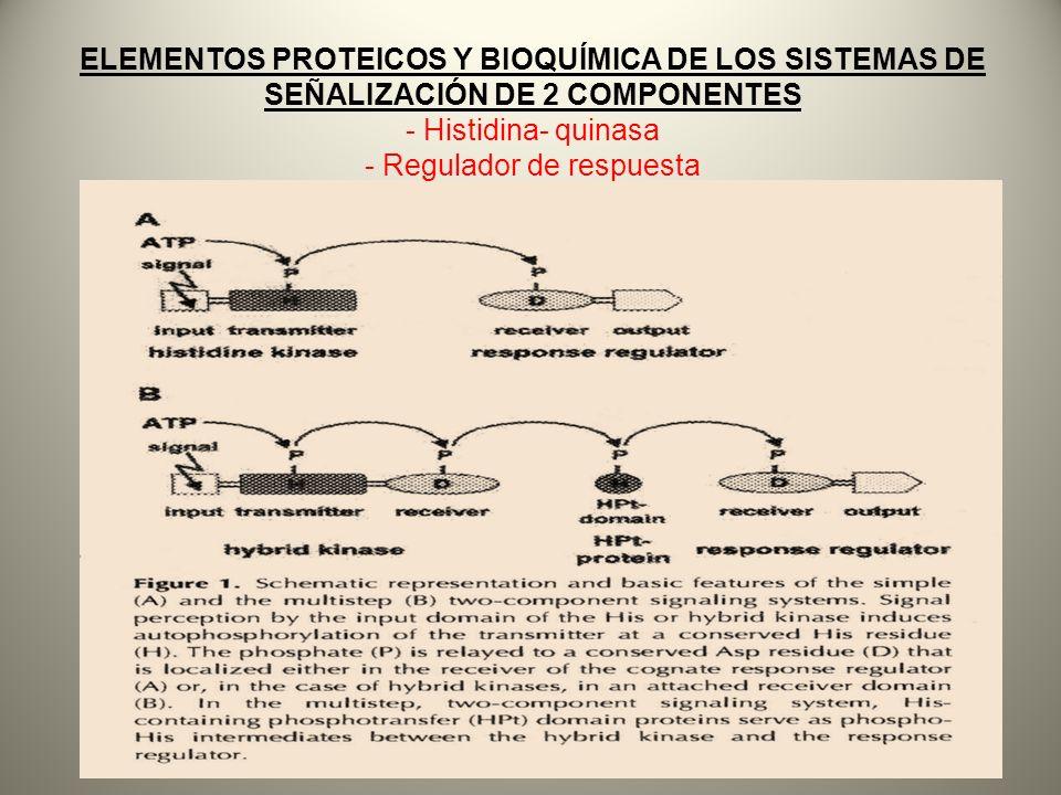 ELEMENTOS PROTEICOS Y BIOQUÍMICA DE LOS SISTEMAS DE SEÑALIZACIÓN DE 2 COMPONENTES - Histidina- quinasa - Regulador de respuesta