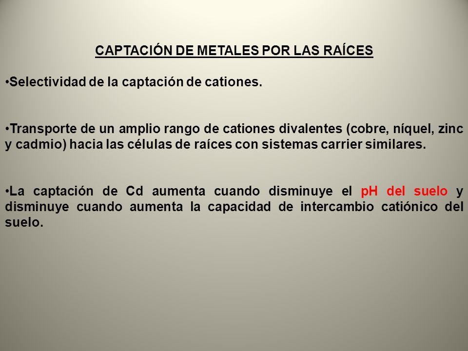 CAPTACIÓN DE METALES POR LAS RAÍCES
