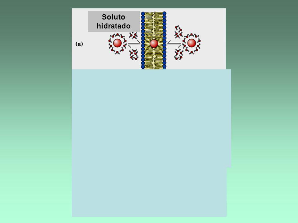 Proteína transportadora