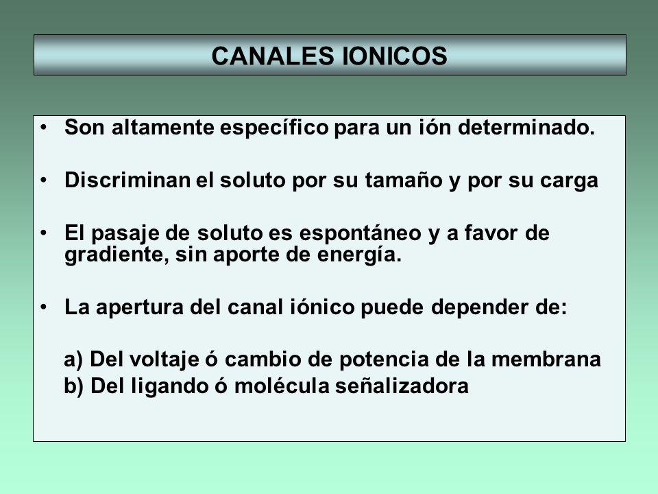 CANALES IONICOS Son altamente específico para un ión determinado.