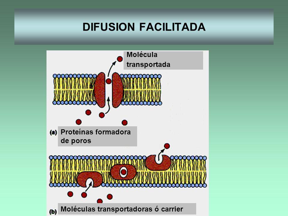 DIFUSION FACILITADA Molécula transportada Proteínas formadora de poros