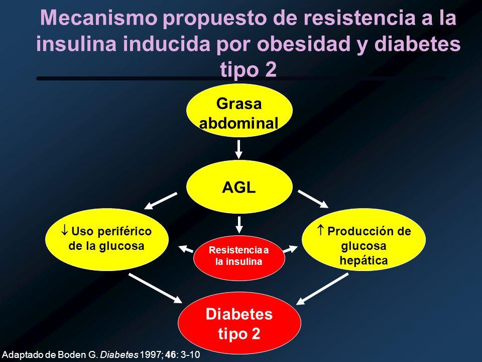 Mecanismo propuesto de resistencia a la insulina inducida por obesidad y diabetes tipo 2