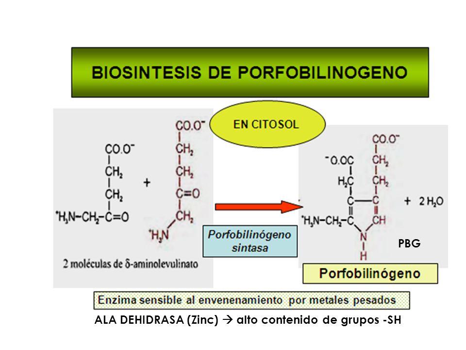 PBG ALA DEHIDRASA (Zinc)  alto contenido de grupos -SH