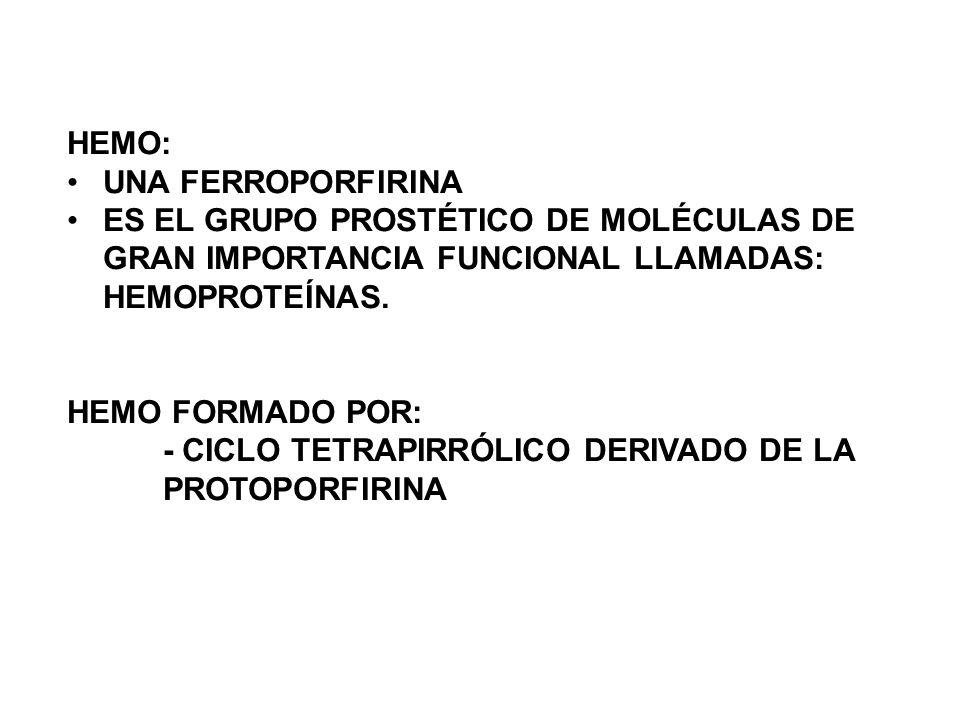 HEMO: UNA FERROPORFIRINA. ES EL GRUPO PROSTÉTICO DE MOLÉCULAS DE GRAN IMPORTANCIA FUNCIONAL LLAMADAS: HEMOPROTEÍNAS.