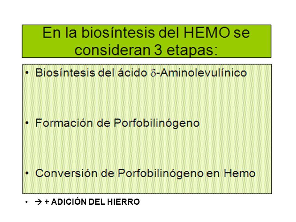  + ADICIÓN DEL HIERRO