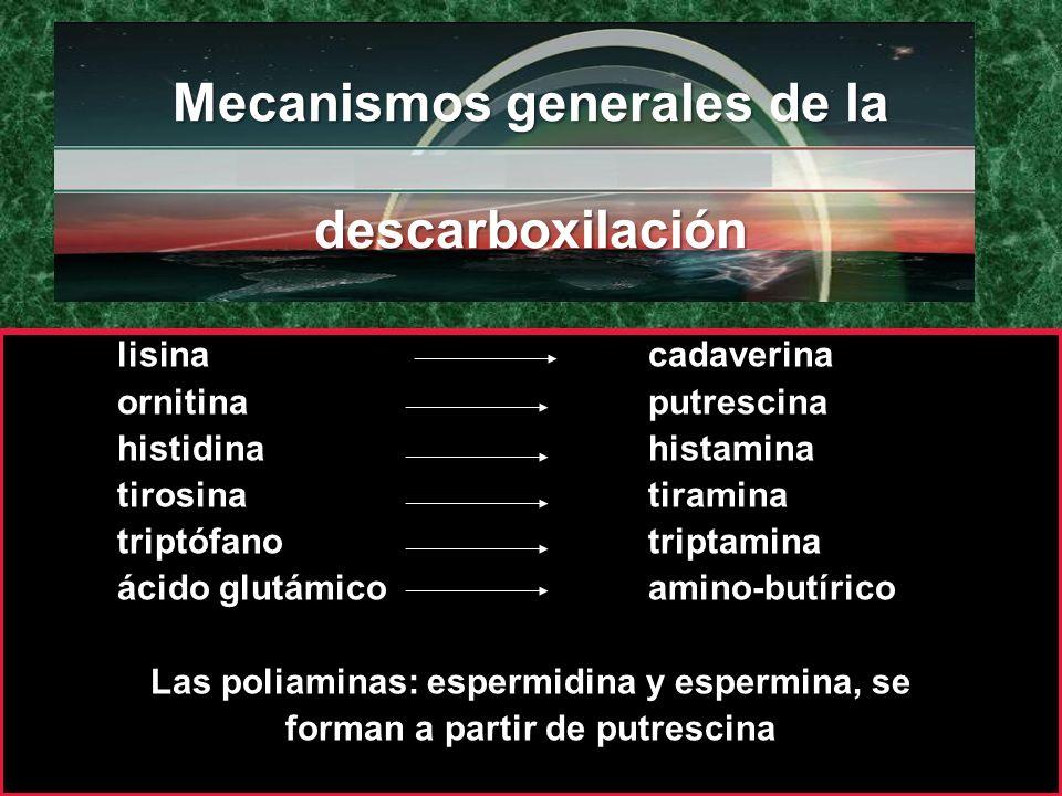 Mecanismos generales de la descarboxilación