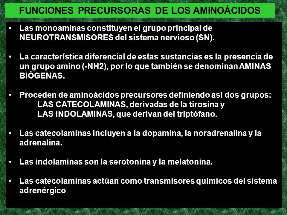 FUNCIONES PRECURSORAS DE LOS AMINOÁCIDOS