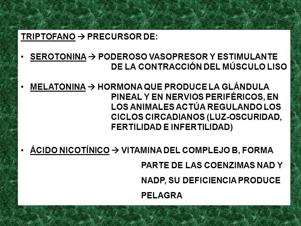 TRIPTOFANO  PRECURSOR DE:
