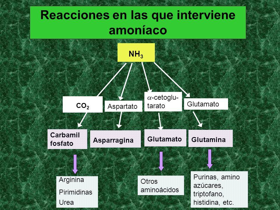 Reacciones en las que interviene amoníaco