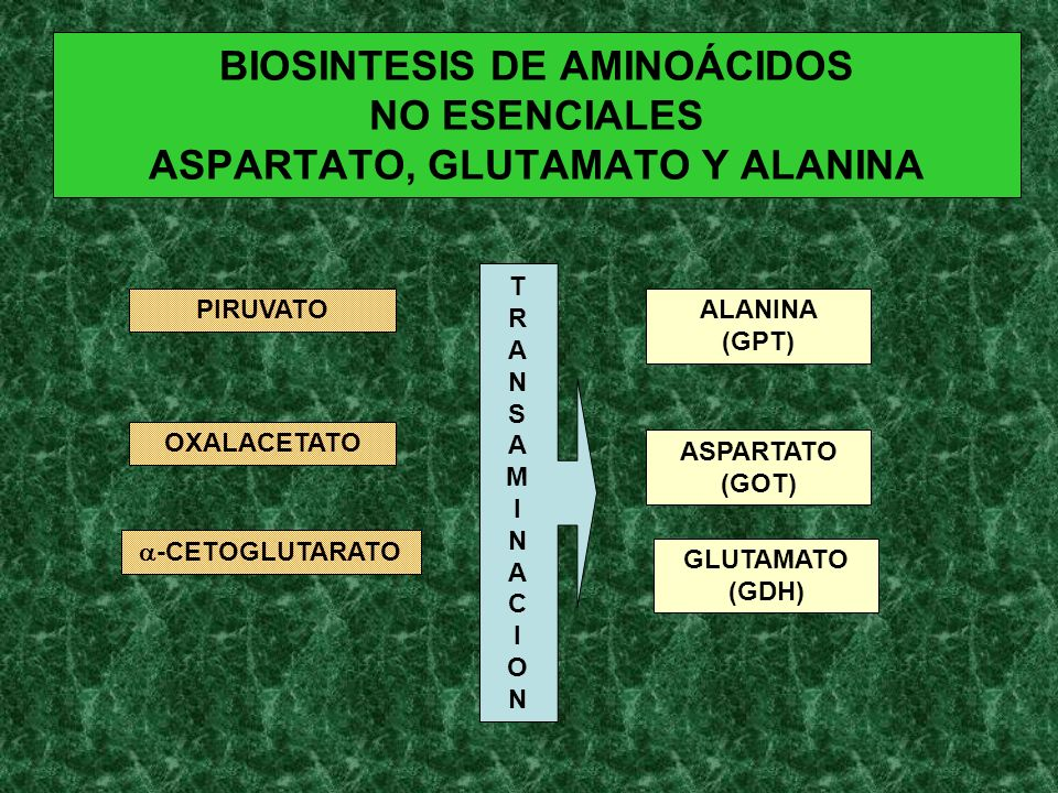 BIOSINTESIS DE AMINOÁCIDOS NO ESENCIALES ASPARTATO, GLUTAMATO Y ALANINA