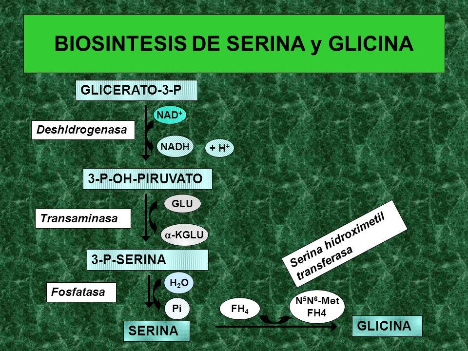 BIOSINTESIS DE SERINA y GLICINA