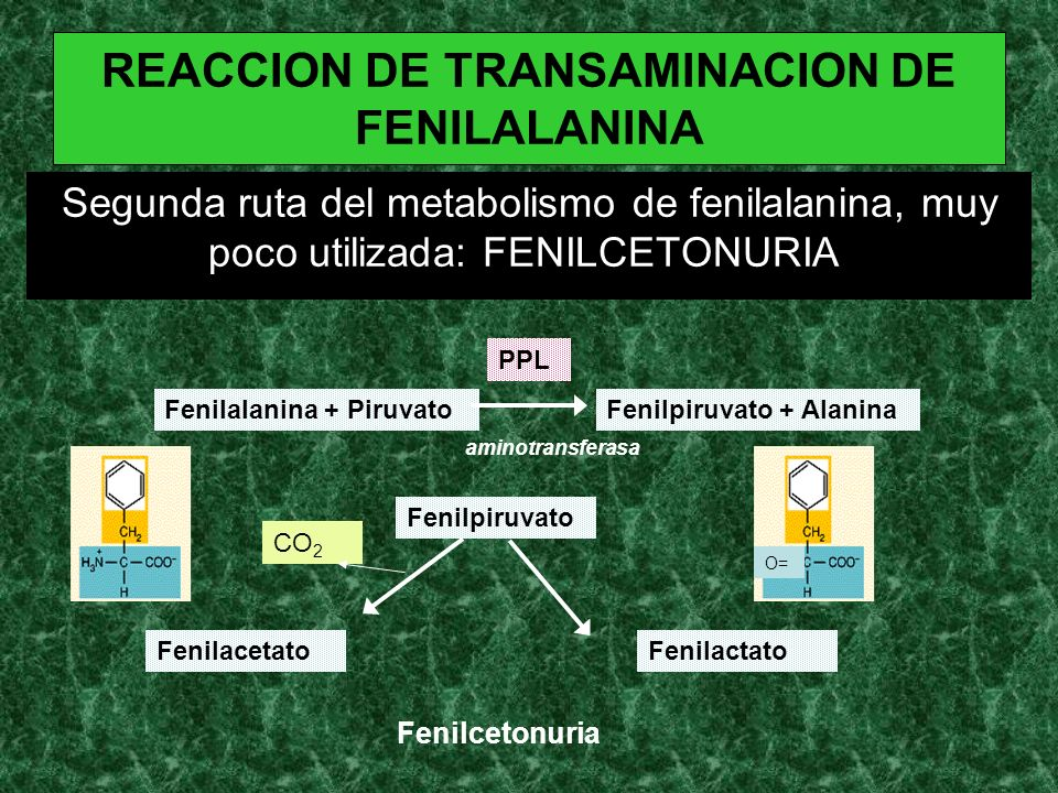 REACCION DE TRANSAMINACION DE FENILALANINA
