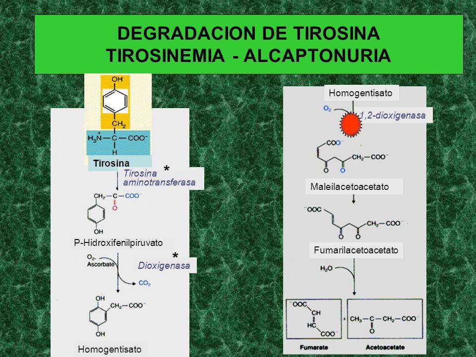 DEGRADACION DE TIROSINA TIROSINEMIA - ALCAPTONURIA