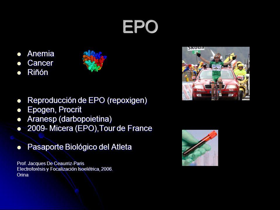 EPO Anemia Cancer Riñón Reproducción de EPO (repoxigen)