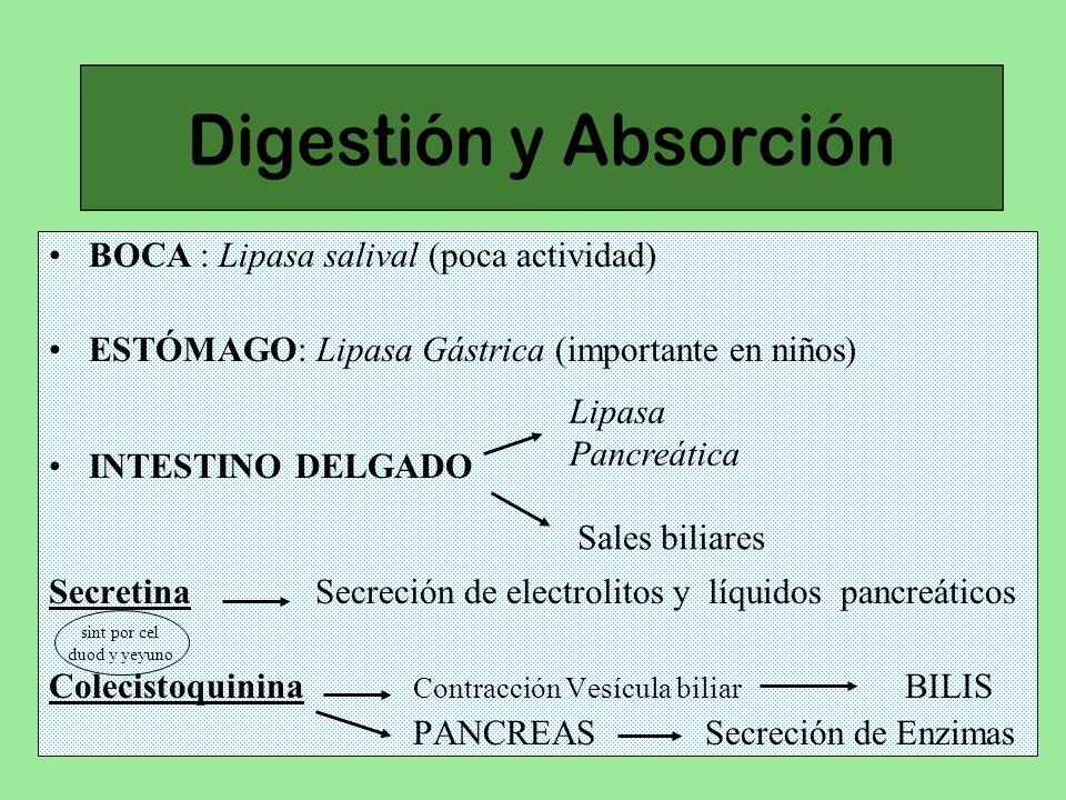 BOCA : Lipasa salival (poca actividad)