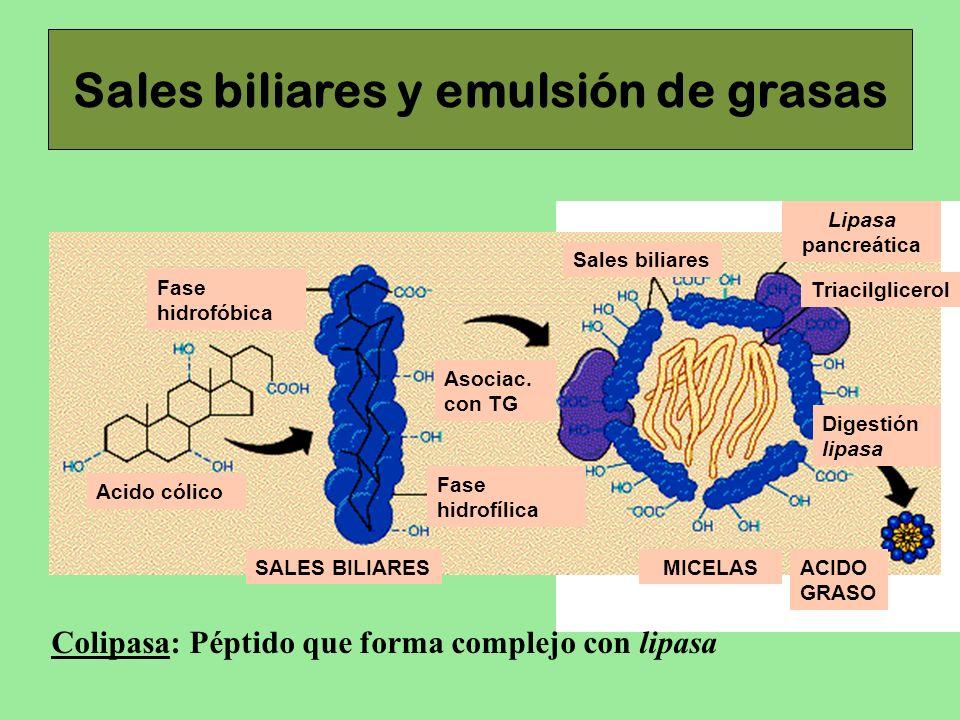 Sales biliares y emulsión de grasas