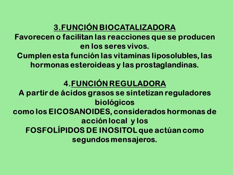 3.FUNCIÓN BIOCATALIZADORA