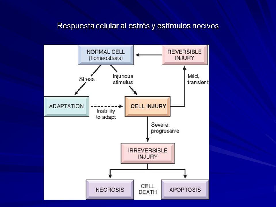 Respuesta celular al estrés y estímulos nocivos