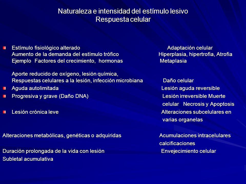 Naturaleza e intensidad del estímulo lesivo Respuesta celular