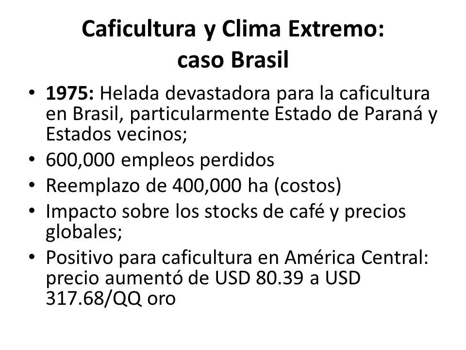 Caficultura y Clima Extremo: caso Brasil