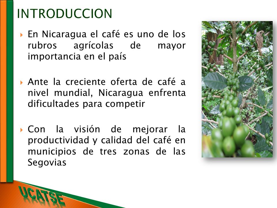 INTRODUCCION En Nicaragua el café es uno de los rubros agrícolas de mayor importancia en el país.