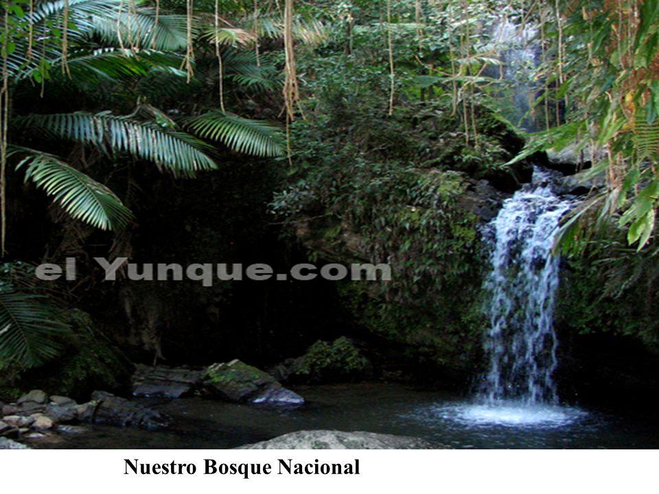 Nuestro Bosque Nacional