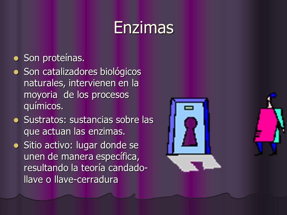 Enzimas Son proteínas. Son catalizadores biológicos naturales, intervienen en la moyoria de los procesos químicos.