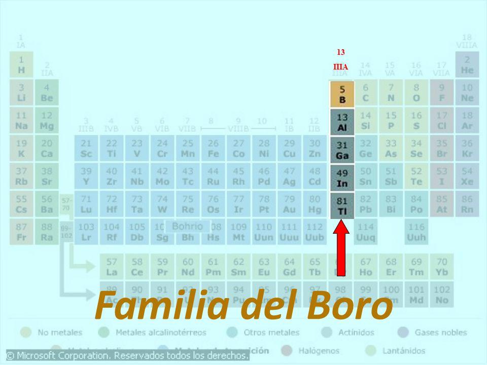 13 IIIA Familia del Boro