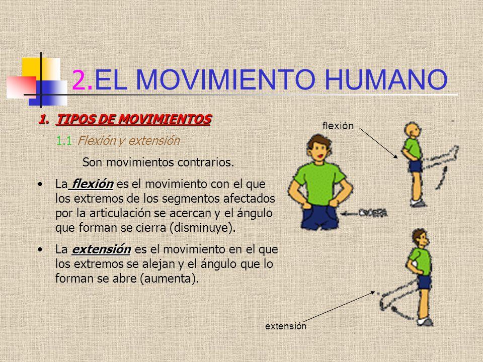 2.EL MOVIMIENTO HUMANO TIPOS DE MOVIMIENTOS 1.1 Flexión y extensión