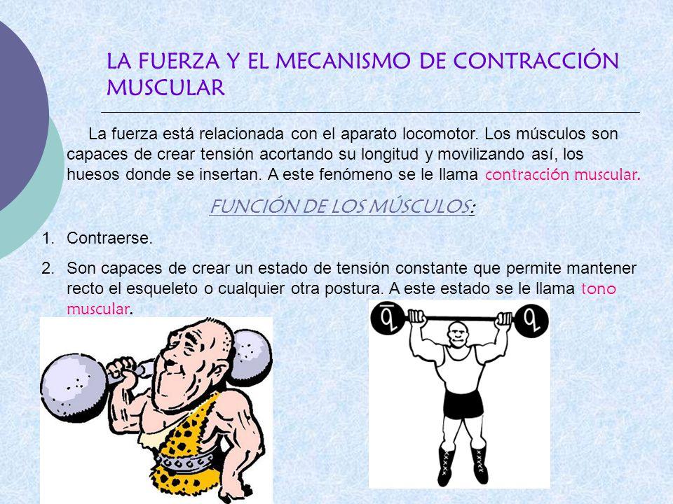 LA FUERZA Y EL MECANISMO DE CONTRACCIÓN MUSCULAR