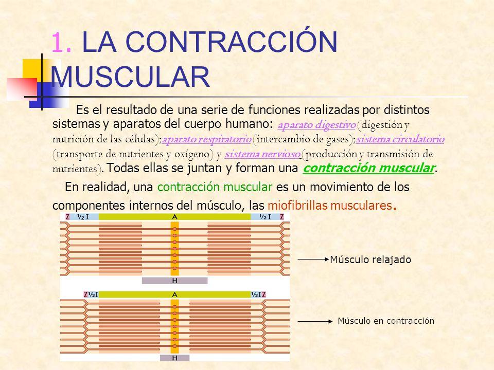 1. LA CONTRACCIÓN MUSCULAR