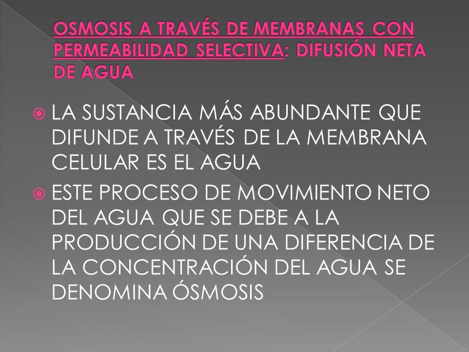 OSMOSIS A TRAVÉS DE MEMBRANAS CON PERMEABILIDAD SELECTIVA: DIFUSIÓN NETA DE AGUA