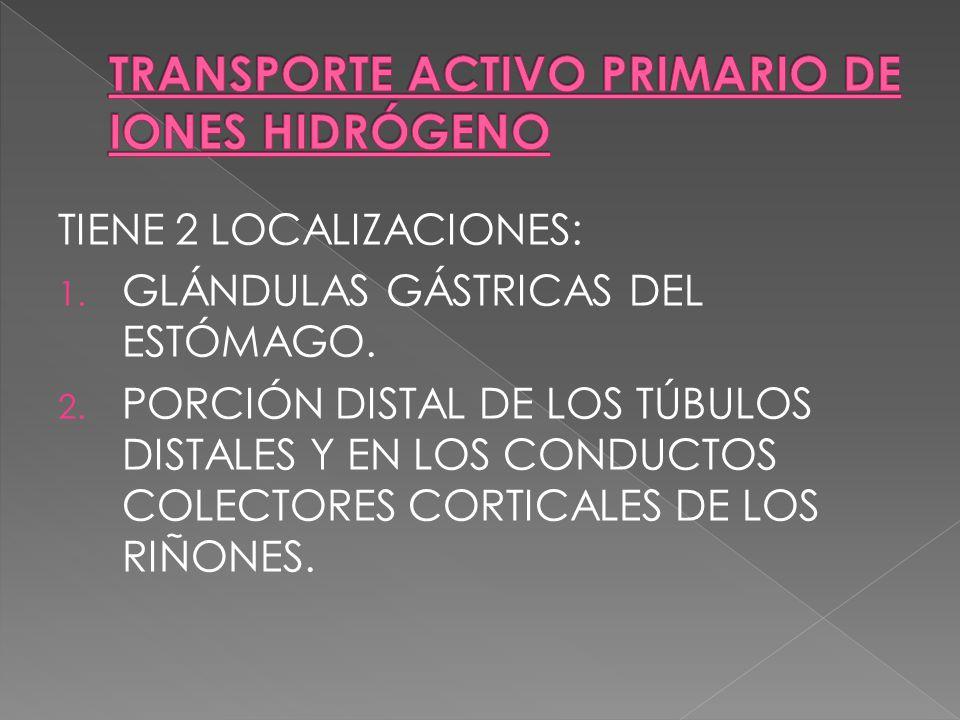 TRANSPORTE ACTIVO PRIMARIO DE IONES HIDRÓGENO