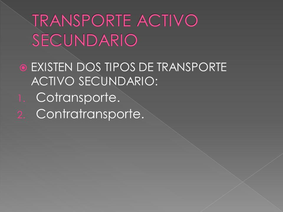 TRANSPORTE ACTIVO SECUNDARIO