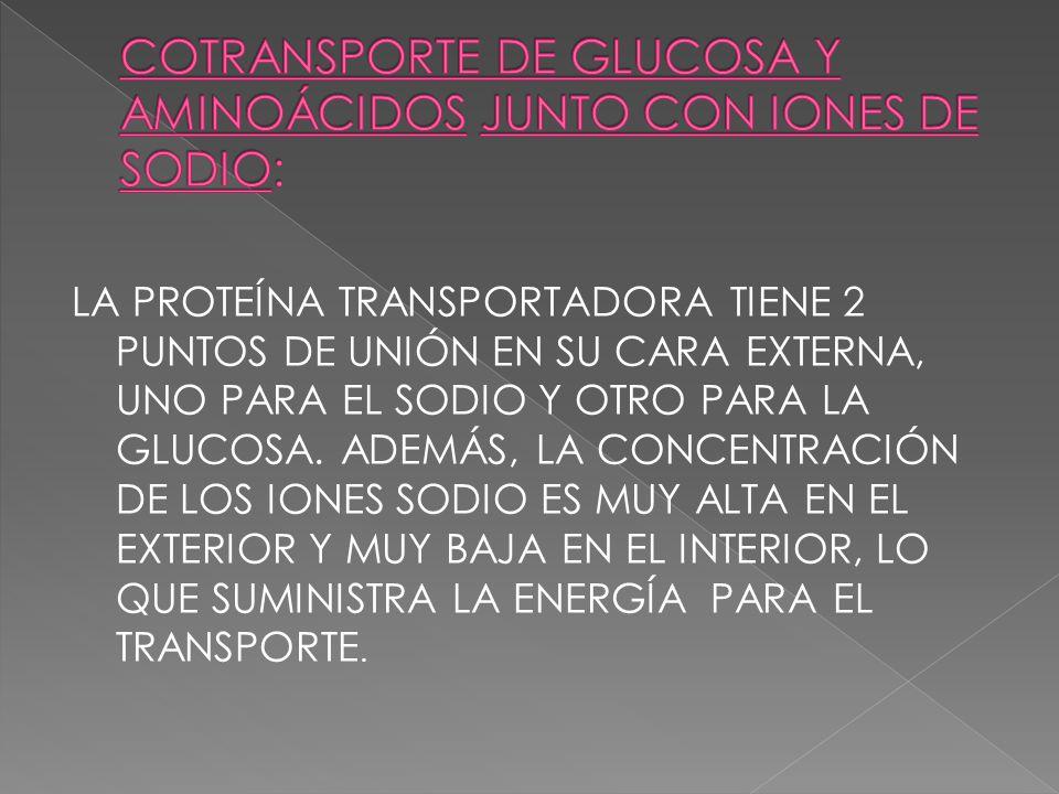 COTRANSPORTE DE GLUCOSA Y AMINOÁCIDOS JUNTO CON IONES DE SODIO: