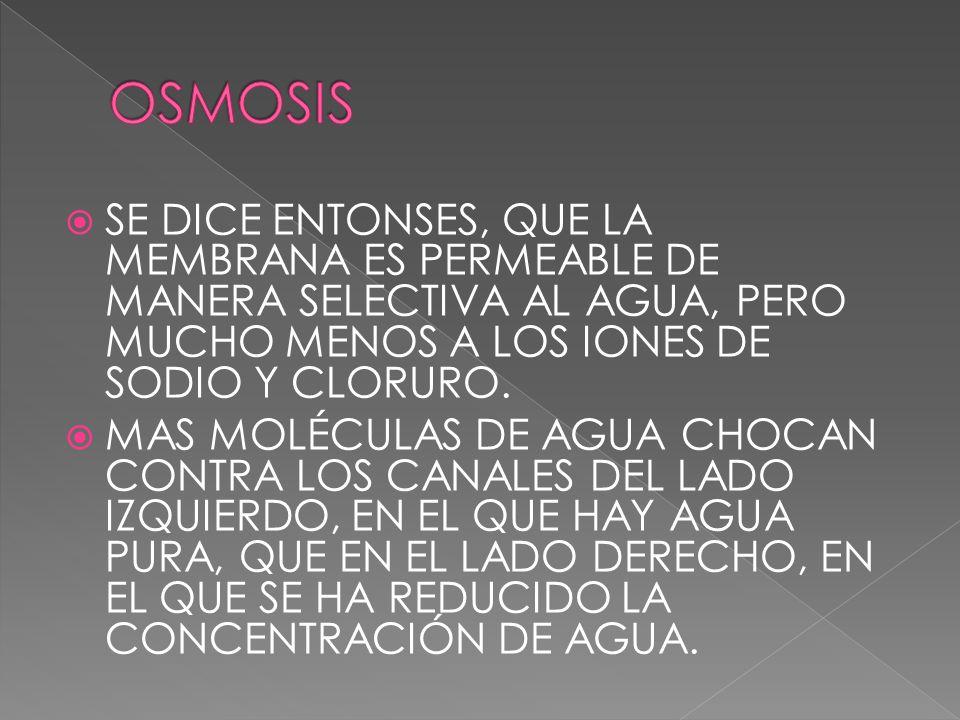 OSMOSIS SE DICE ENTONSES, QUE LA MEMBRANA ES PERMEABLE DE MANERA SELECTIVA AL AGUA, PERO MUCHO MENOS A LOS IONES DE SODIO Y CLORURO.