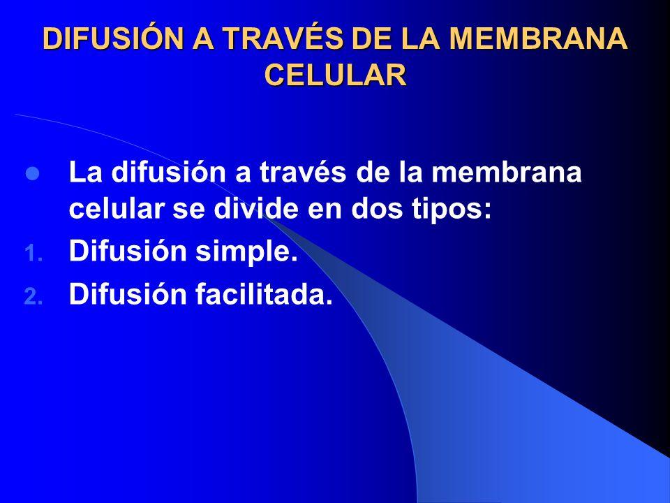 DIFUSIÓN A TRAVÉS DE LA MEMBRANA CELULAR