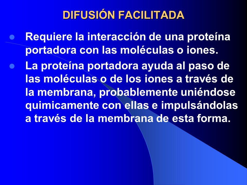 DIFUSIÓN FACILITADA Requiere la interacción de una proteína portadora con las moléculas o iones.