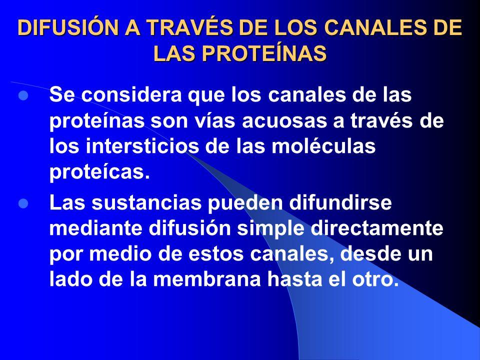 DIFUSIÓN A TRAVÉS DE LOS CANALES DE LAS PROTEÍNAS
