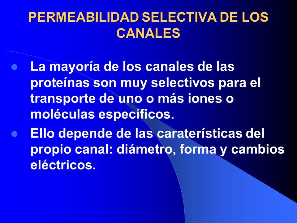 PERMEABILIDAD SELECTIVA DE LOS CANALES