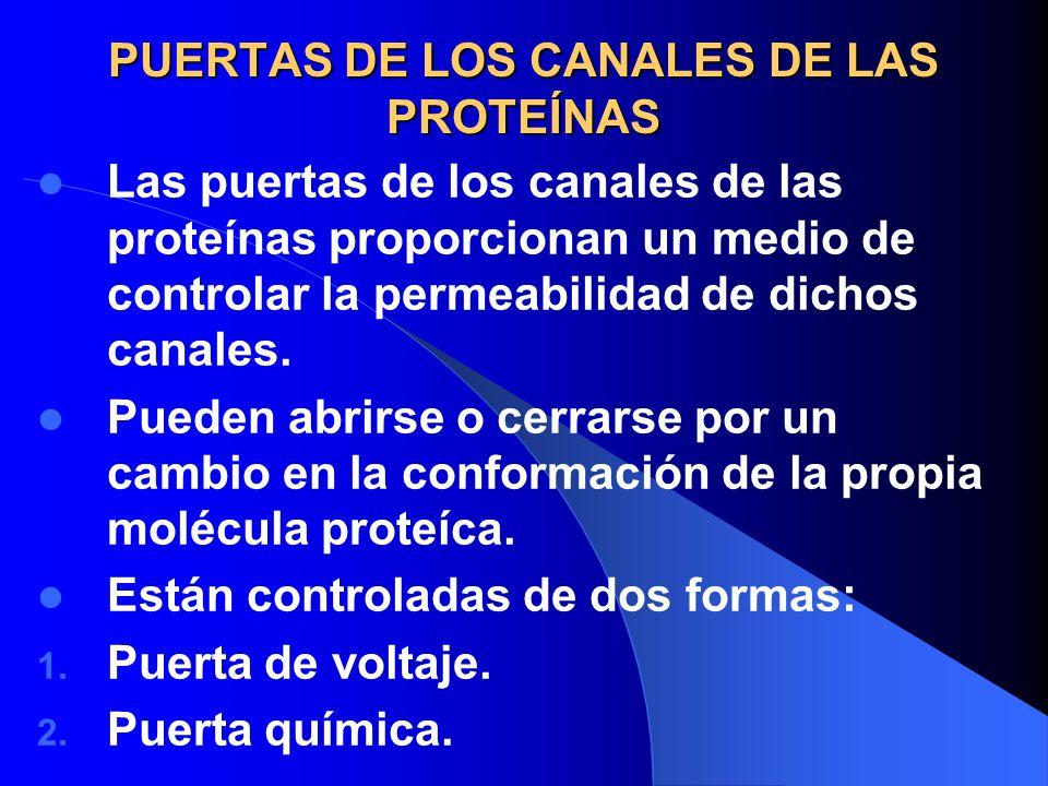 PUERTAS DE LOS CANALES DE LAS PROTEÍNAS