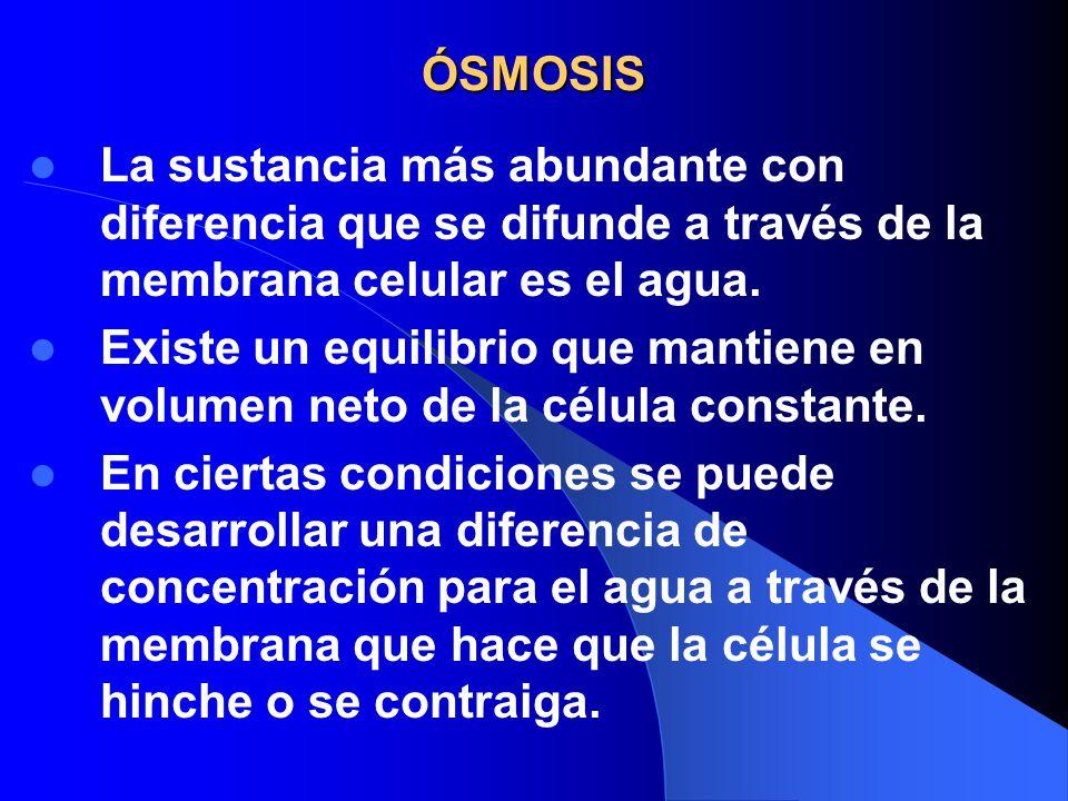 ÓSMOSIS La sustancia más abundante con diferencia que se difunde a través de la membrana celular es el agua.