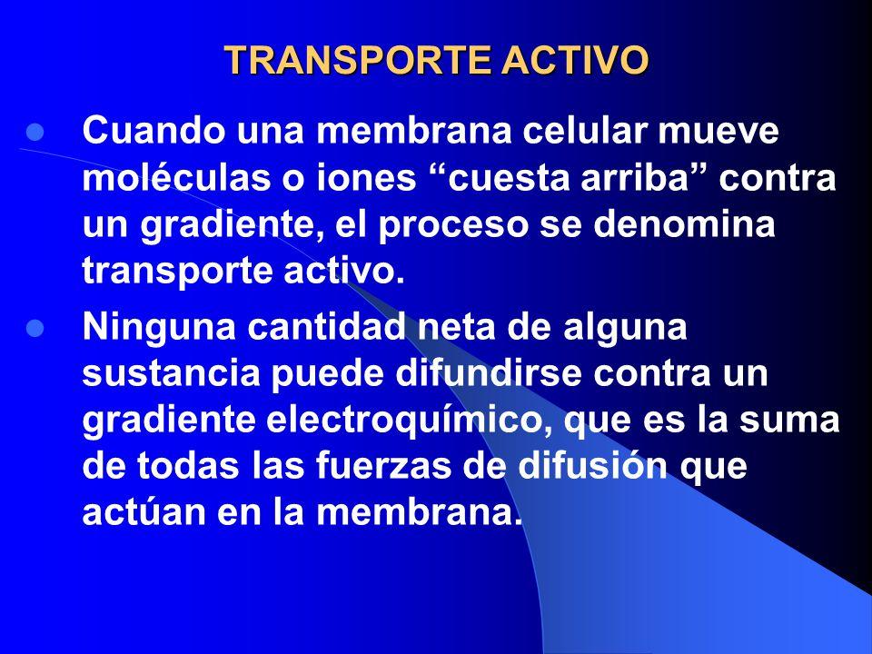 TRANSPORTE ACTIVO Cuando una membrana celular mueve moléculas o iones cuesta arriba contra un gradiente, el proceso se denomina transporte activo.