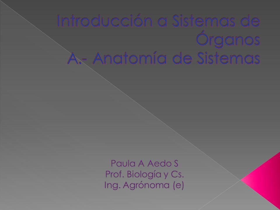 Introducción a Sistemas de Órganos A.- Anatomía de Sistemas