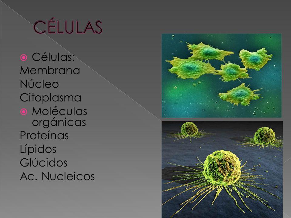 CÉLULAS Células: Membrana Núcleo Citoplasma Moléculas orgánicas