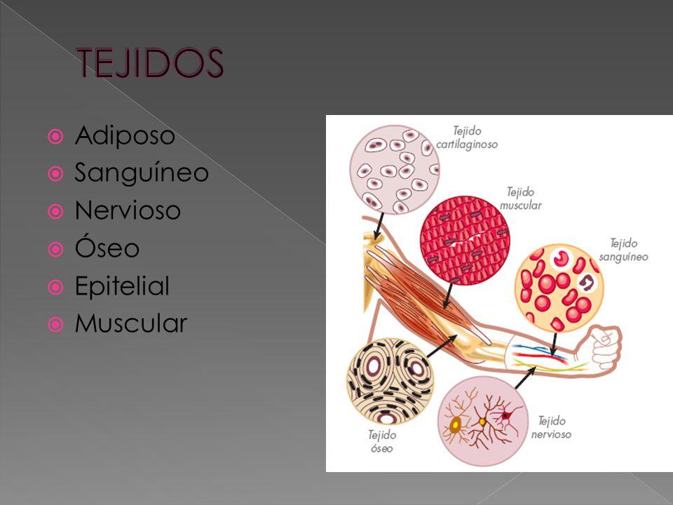TEJIDOS Adiposo Sanguíneo Nervioso Óseo Epitelial Muscular