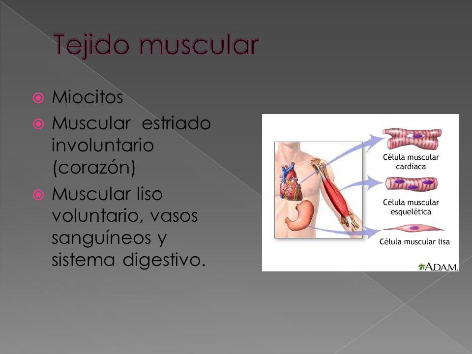 Tejido muscular Miocitos Muscular estriado involuntario (corazón)